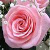 День святого Валентина, миниатюра для сценария на День святого Валентина